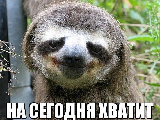 ленивец фото приколы